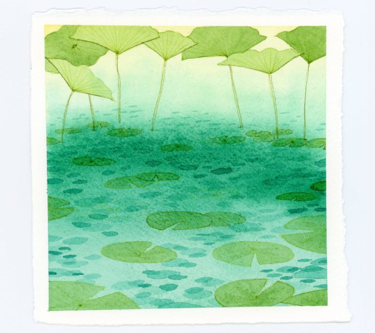 Lily pads watercolor and ink illustration