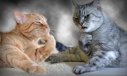 koty zamyslone