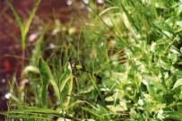 green2012img335