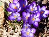 vibrantoptimismSpringShort2013April spring misc 006