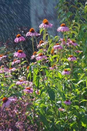 FlowersHiddenLakeGardenMisc 152