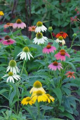 FlowersHiddenLakeGardenMisc 169