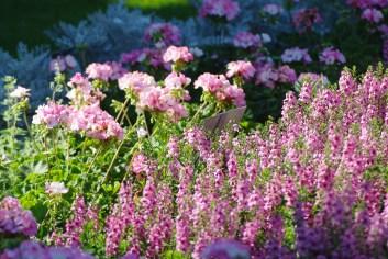 FlowersHiddenLakeGardenMisc 171