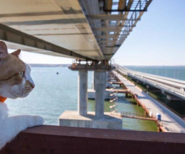 Хвостатый талисман Крымского моста отметил День рождения