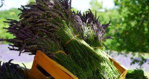 22 июля – Кирилл и Панкратий. Огурцы, лекарственные травы и любовная магия