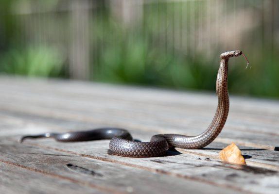 25 сентября — Артамонов день. Берегитесь змей!