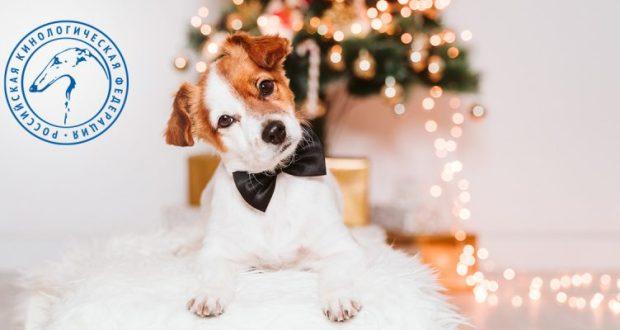 """Ищете подарок """"под ёлку""""? Собаку покупать точно не стоит"""