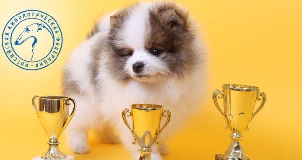 Десятка самых популярных пород собак у россиян в 2020 году