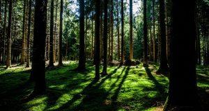 Ялта — среди самых «зелёных» городов в России