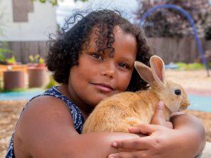 destiny rabbit