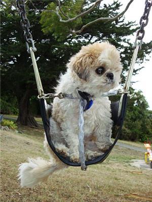 saatchi-ina-swing