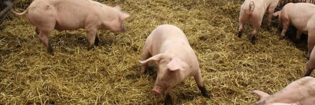 Eläinten hyvinvointi