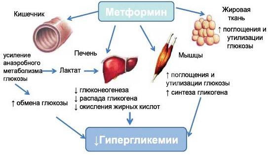Glucophage XR mg, 30 comprimate, Merck Sante : Farmacia Tei