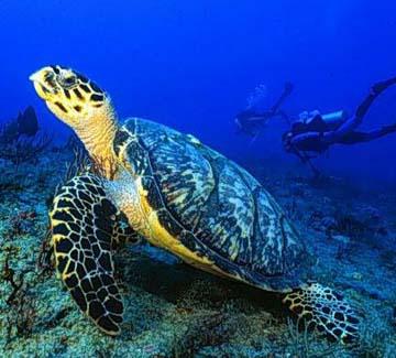 sea-turtle-by-sandra-edwards