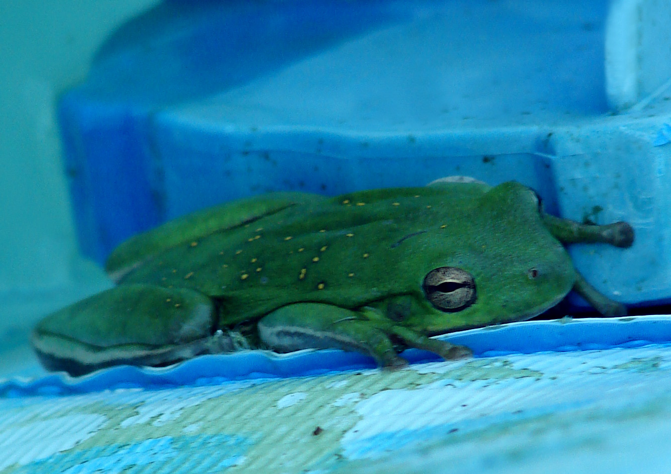 Close Up of Tree Frog on Pool Pump
