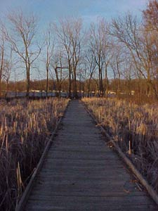 Pew Island Trail