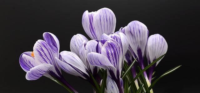 Τα λουλούδια είναι χωρίς ελπίδα (Αντόνιο Πόρκια, μετάφραση: Σπύρος Δόικας)