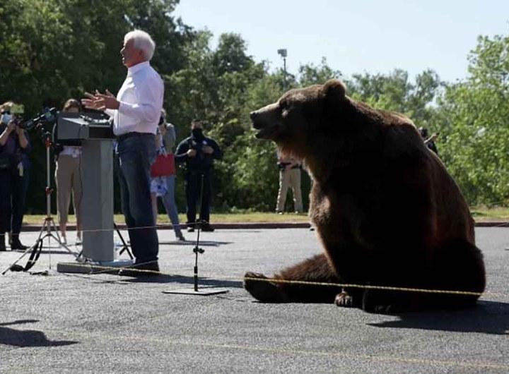 Californie: John Cox, le candidat républicain, fait campagne avec un ours