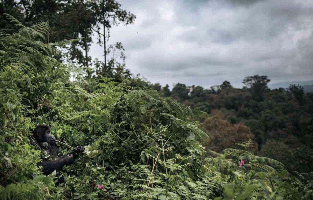 RDC: Le plus grand parc du pays retiré de la liste du patrimoine mondial en péril