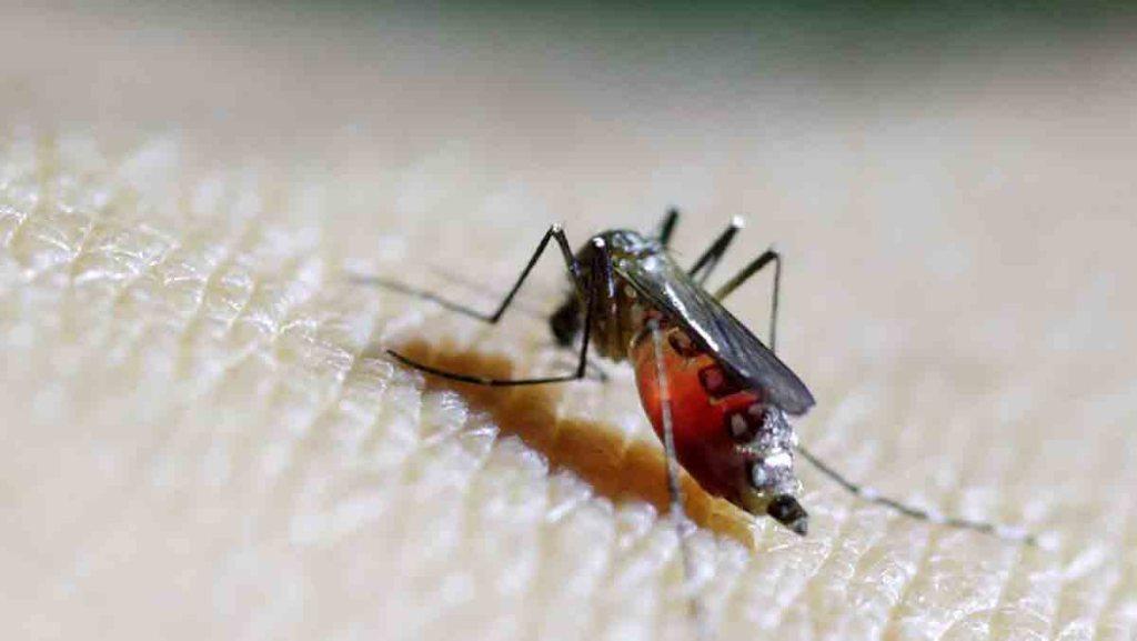 Un premier vaccin anti-paludisme recommandé par l'OMS à grande échelle