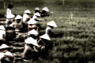 VN Nón lá Rice Hat 01