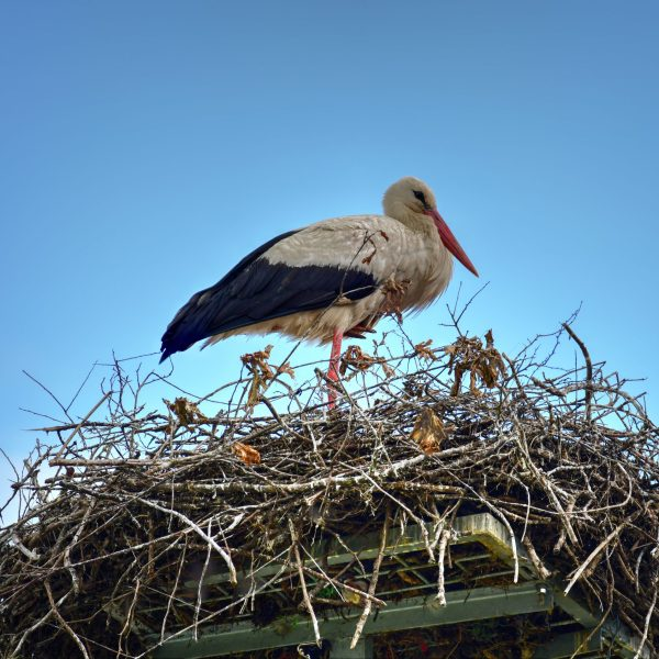 SMC-stork-pointers-travel