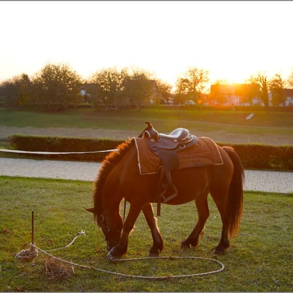 SMC-horse-pointers-travel