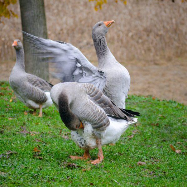 birds-pointers-travel