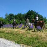 Konjima kroz brige