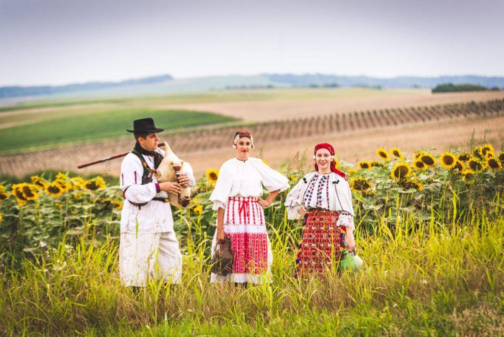croatia-pointers-osijek-slavonia