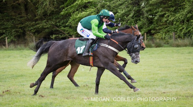 REPORT – SOUTH TETCOTT POINT-TO-POINT AT UPCOTT CROSS – BANK HOLIDAY MONDAY 27TH MAY 2019