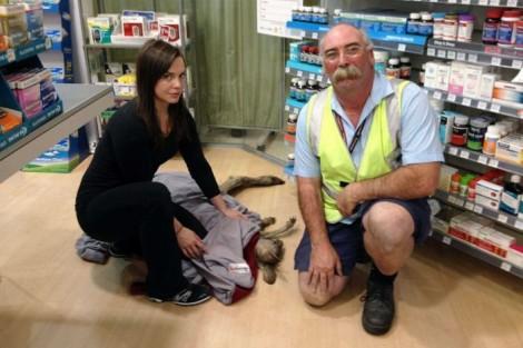 Kangaroo Airport