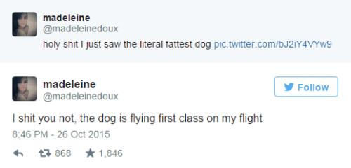 AA Fat Dog Tweet 2
