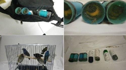 birds-smuggled