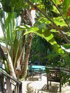 La piscine d'Ô coeur de Deshaies