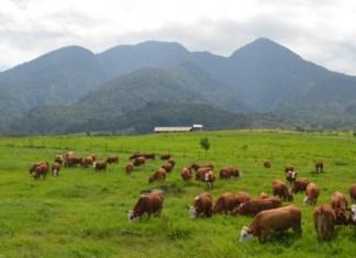 Destinasi travel di Padang