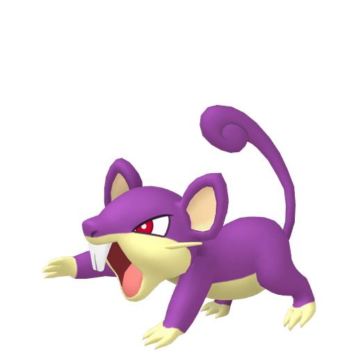 Rattata Femelle