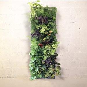 Composition Paris Kit de mur végétal
