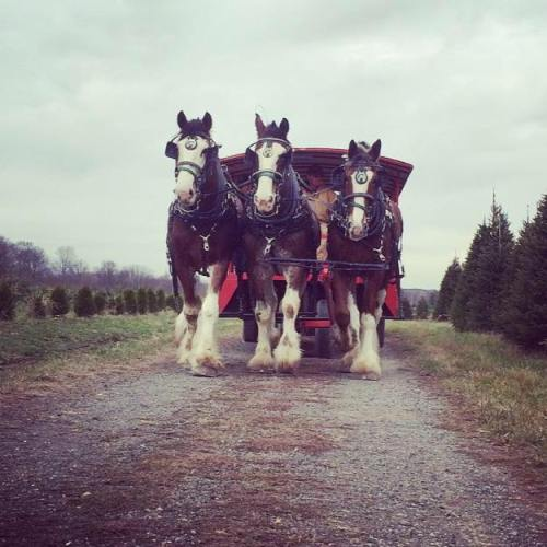 Pioneer Trails Tree Farm Poland Business Association