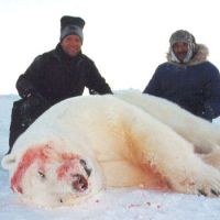 Are Polar Bears Going Extinct?   Why are Polar Bears Going Extinct?
