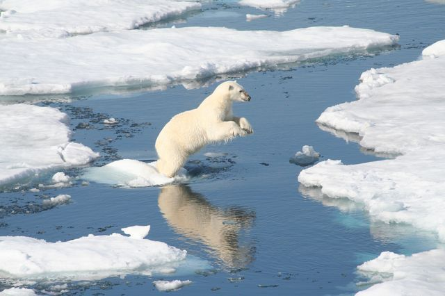 POLAR BEAR CONSERVATION STATUS