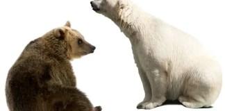where do polar bears come from