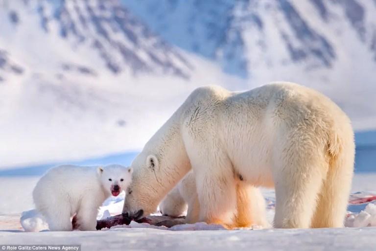 How Much Do Polar Bears Eat?