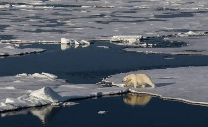 International Polar Bear Day 2021 – In the Name of a Polar Bear