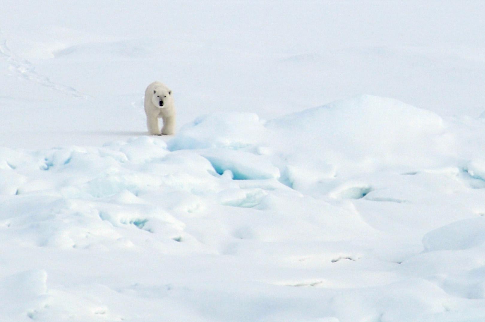Arctic Habitat Worksheet