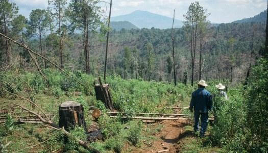 Cherán K'eri: la resistencia de los bosques purhépechas |DESFILADERO
