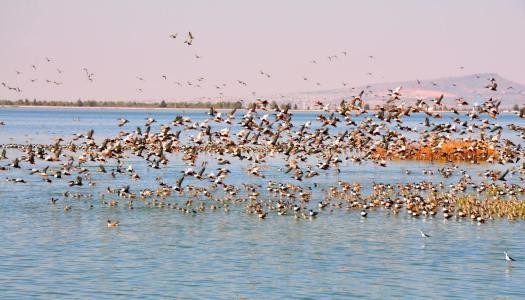 Nuevo Aeropuerto en Texcoco pone en riesgo a 200 mil aves