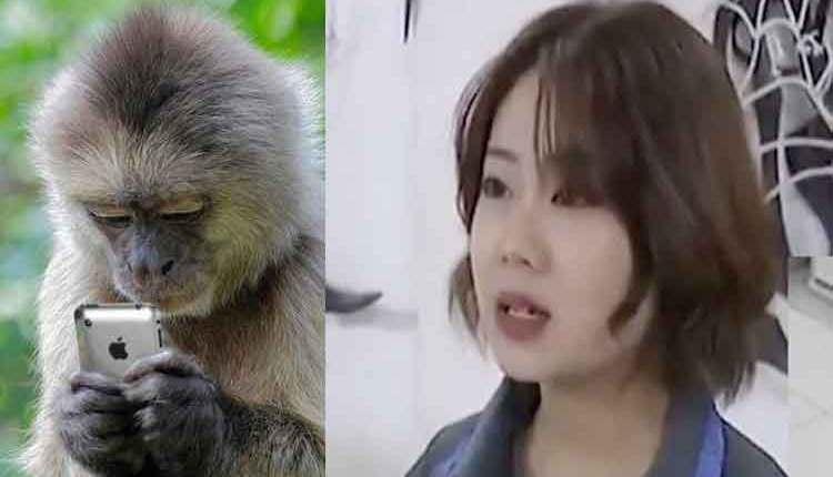 monkey-use-mobile