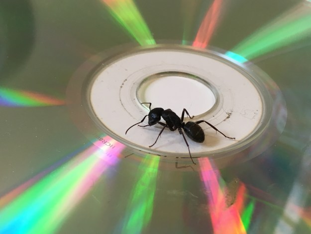 big ant on a CD