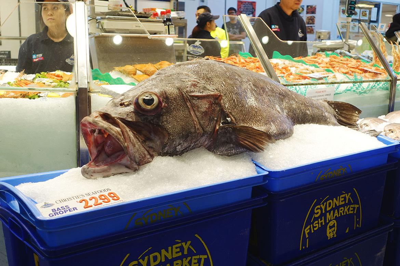 悉尼魚市場 Sydney Fish Market